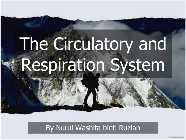 The Circulatory and Respiration System  By Nurul Washifa binti Ruzlan