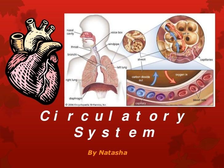 The Circulatory System<br />By Natasha <br />