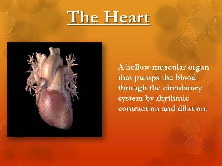 circulatory system essay questions The free biology research paper (cardiovascular system (good a paper) essay) the cardiovascular system, also known as the circulatory system, refers to the.