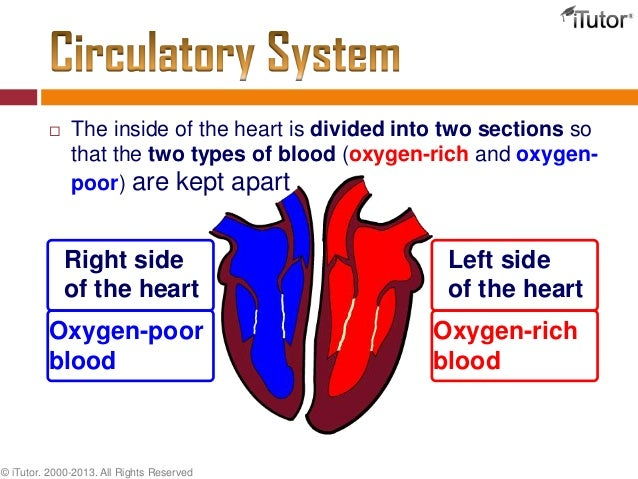 overview of the cardiovascular system essay Free essay on cardiovascular disease research paper available totally free at echeatcom, the largest free essay community.
