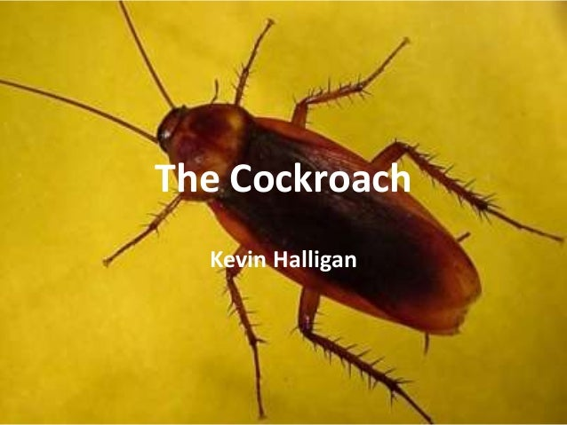 the cockroach kevin halligan Posts about personal reflection written by about tag archives: personal reflection the cockroach by kevin halligan 5 replies right a film to contextualise the cockroach both shakespeare's hamlet and halligan's cockroach take as their primary subject the uncertainty of.