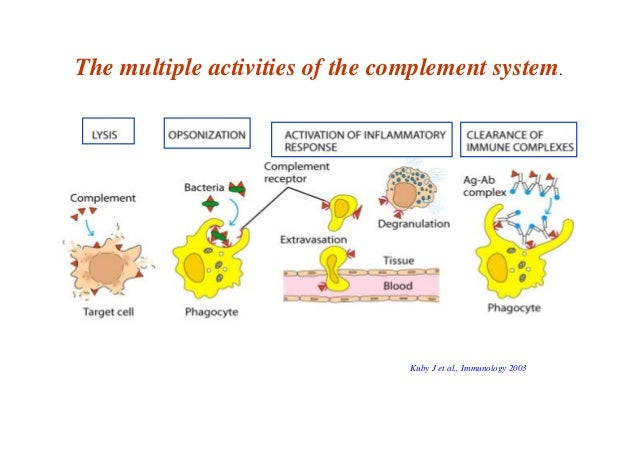 the complement system in microorganisms The complement system consists of a group of proteins that are involved in a series of reactions  the lymphatic system transports microorganisms,.