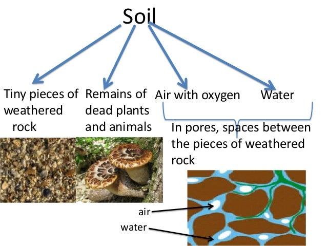 Soil science for teachers massive the real dirt on soil for Soil facts for 4th grade