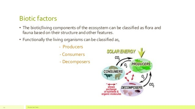 The components of an ecosystem | 638 x 359 jpeg 33kB