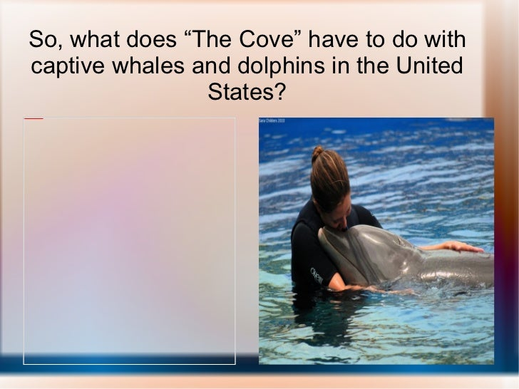 """So, what does """"The Cove"""" have to do with captive whales and dolphins in the United States?"""