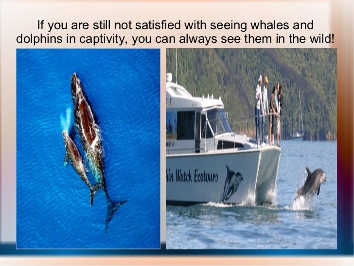 If you are still not satisfied with seeing whales and dolphins in captivity, you can always see them in the wild!