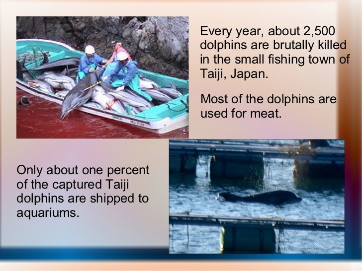 Every year, about 2,500 dolphins are brutally killed in the small fishing town of Taiji, Japan. Most of the dolphins are u...