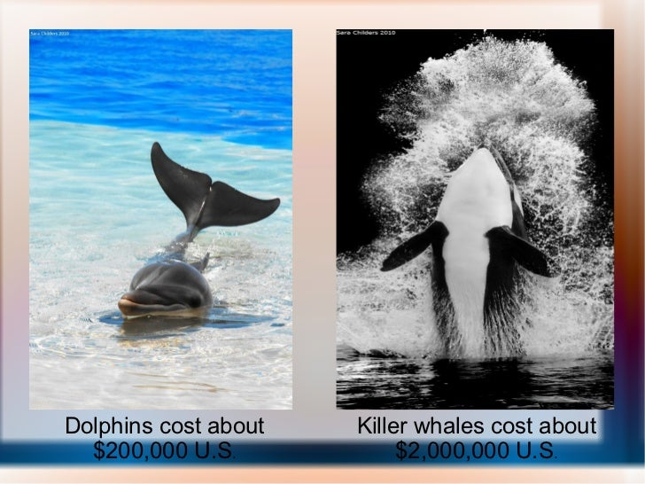 Dolphins cost about $200,000 U.S . Killer whales cost about $2,000,000 U.S .
