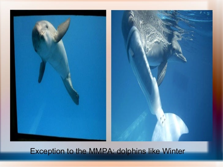 Exception to the MMPA: dolphins like Winter