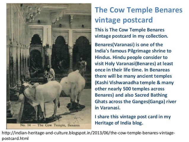 This is The Cow Temple Benaresvintage postcard in my collection.Benares(Varanasi) is one of theIndias famous Pilgrimage sh...