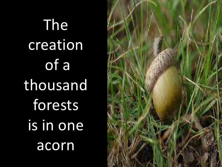 The creation     of athousand  forests is in one   acorn