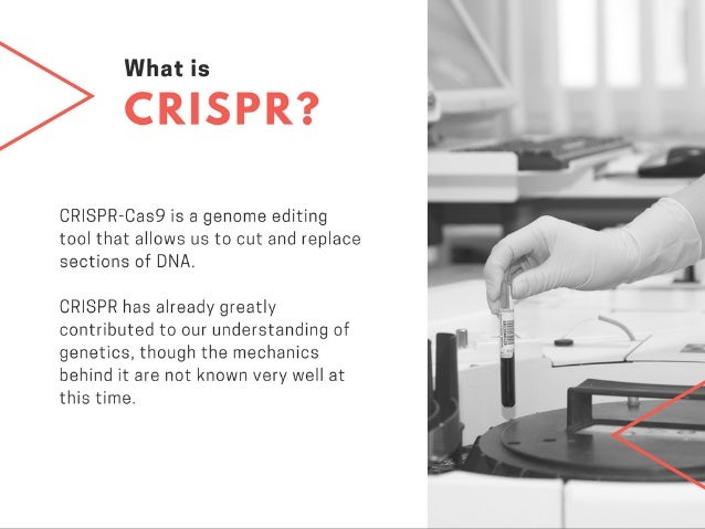 The CRISPR Controversy—The Debate Over Genetic Manipulation