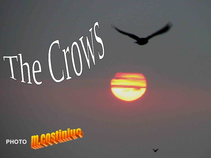 The Crows m.costiniuc PHOTO
