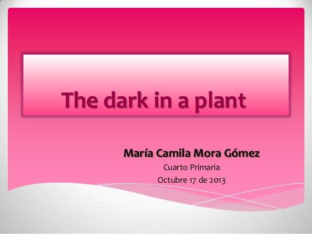 The dark in a plant María Camila Mora Gómez Cuarto Primaria Octubre 17 de 2013