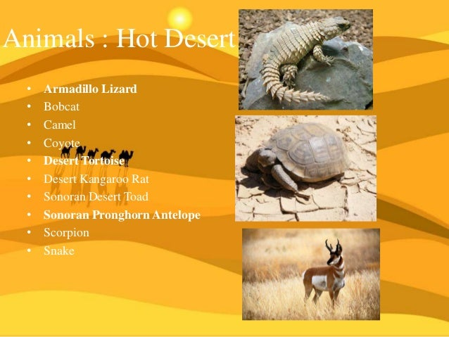 what are the characteristics of a desert biome