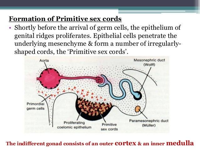 Primitive Sex Cords 47
