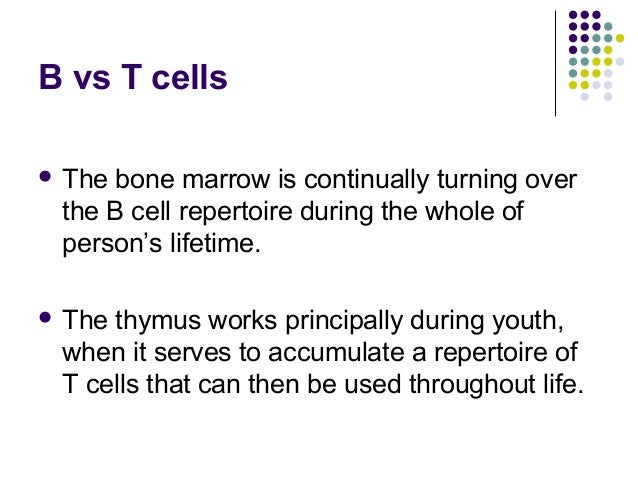 The development of t lymphocytes