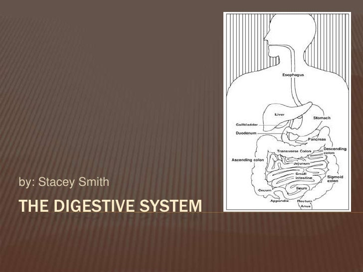 The digestive system<br />by: Stacey Smith<br />