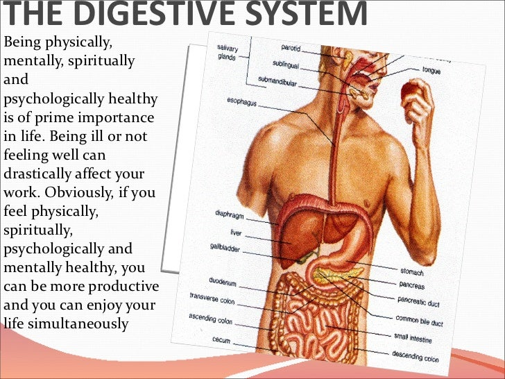 THE DIGESTIVE SYSTEM <ul><li>Being physically, mentally, spiritually and psychologicallyhealthyis of prime importance in...