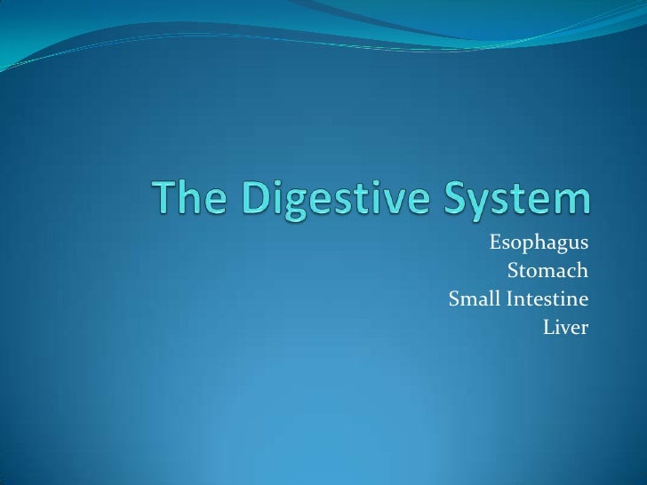The Digestive System<br />Esophagus<br />Stomach<br />Small Intestine<br />Liver<br />