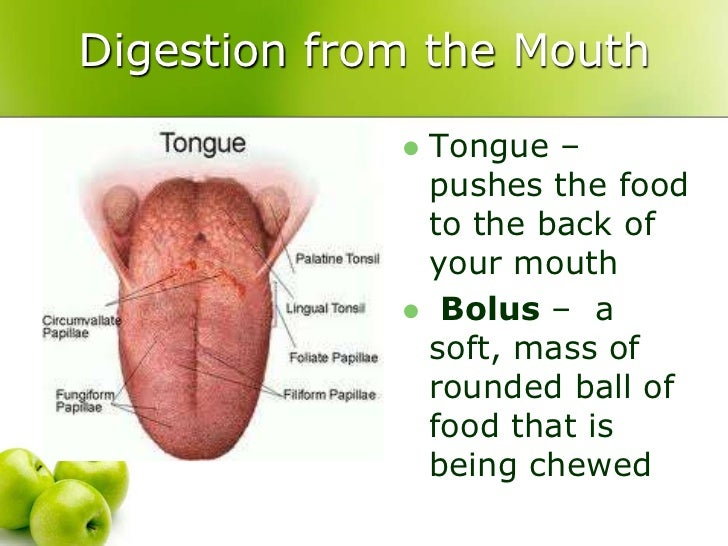 Which Organ Carries Food From The Mouth Into The Stomach