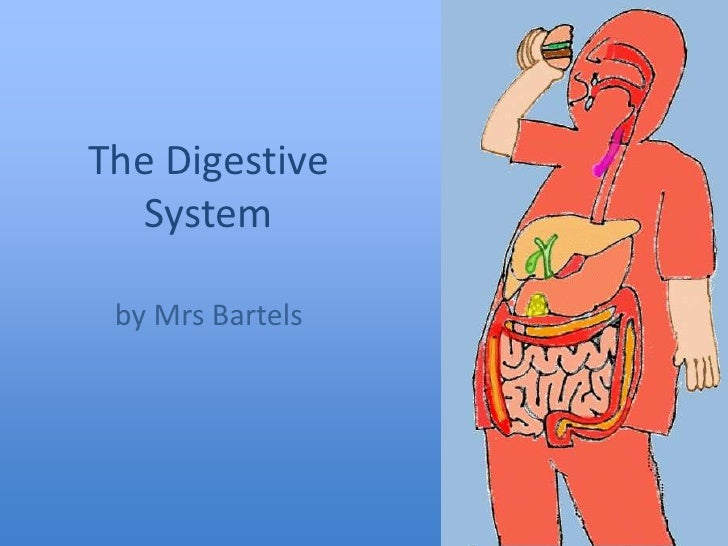 The Digestive System<br />by Mrs Bartels<br />
