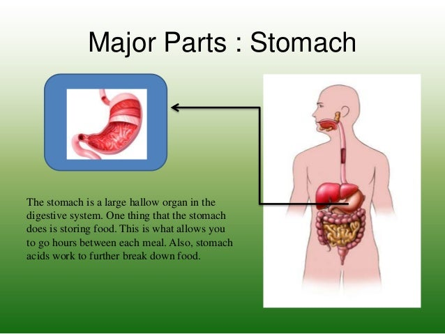 The digestive system p3