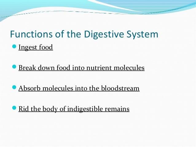 The digestive system ppt Slide 3