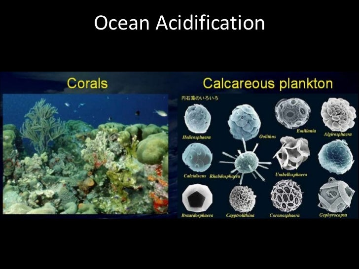 Ocean Acidification<br />