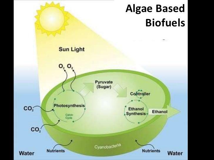 Algae Based Biofuels<br />