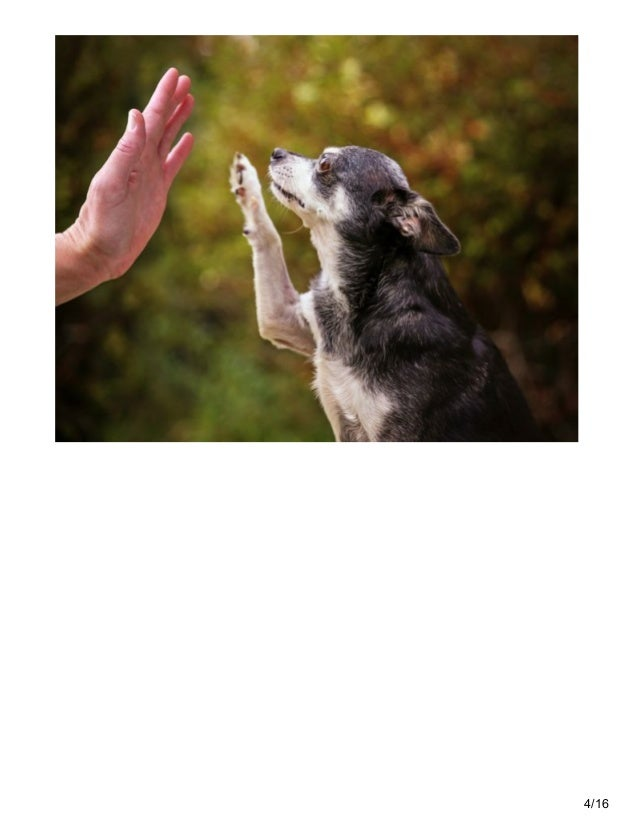 Can Older Dogs Learn New Tricks
