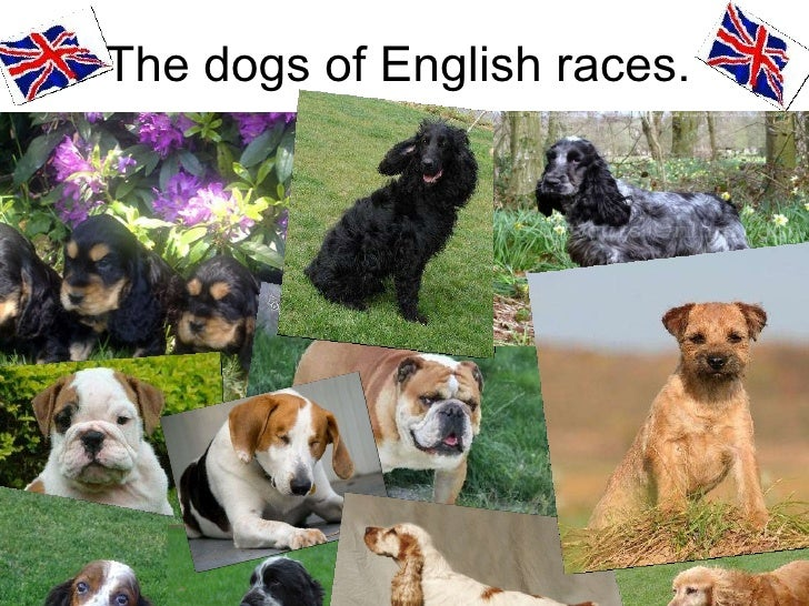 The dogs of English races.