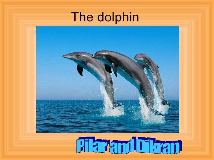 The dolphin Pilar and Dikran