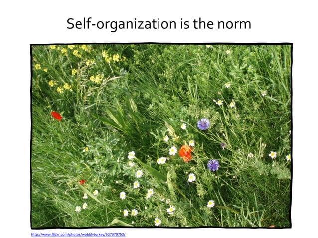Management = governance and leadership http://www.flickr.com/photos/tonythemisfit/3495664861/