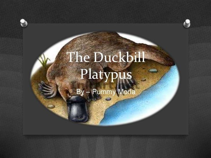 The Duckbill  Platypus By – Pummy Morla