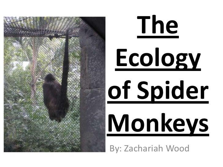 The Ecologyof SpiderMonkeysBy: Zachariah Wood