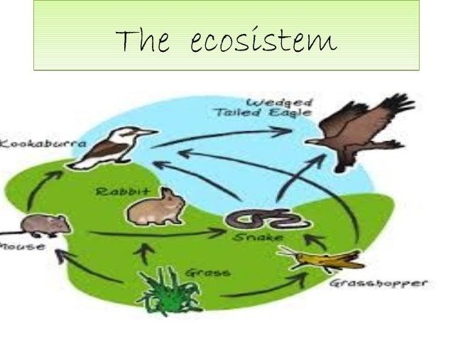 The ecosistem BY belen fer and selene