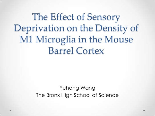 The Effect of SensoryDeprivation on the Density of M1 Microglia in the Mouse       Barrel Cortex              Yuhong Wang ...