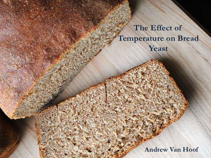The Effect ofTemperature on Bread       Yeast      Andrew Van Hoof