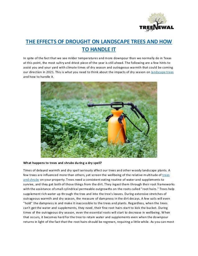 the effects of drought on landscape trees and how to handle it 1 638