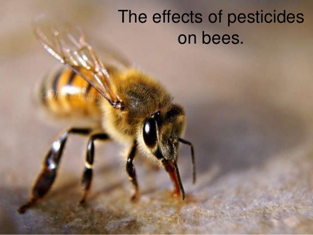 The effects of pesticideson bees.