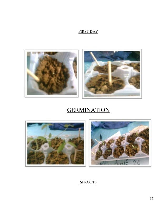 effect ph levels growth bean plants The normal ph for pea plants growth is 60 to 75 the ph of urine is 60, and pure water is 70.