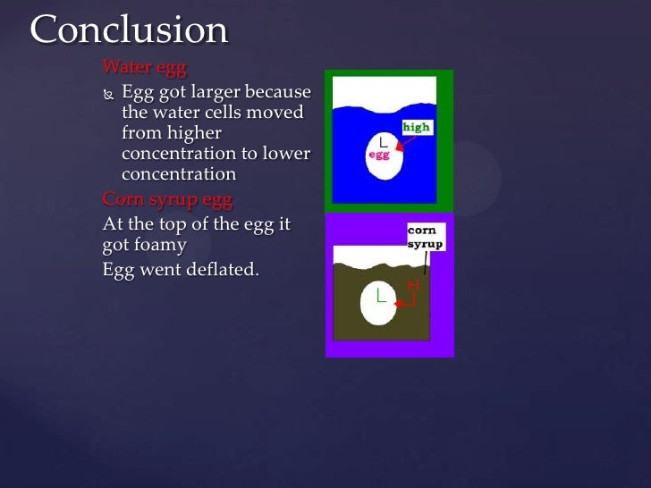 """osmosis eggs conclusion Diffusion and osmosis in an egg model: exploring membrane physiology  diffusion and osmosis in an egg  """" if this conclusion is drawn, the alternate ."""
