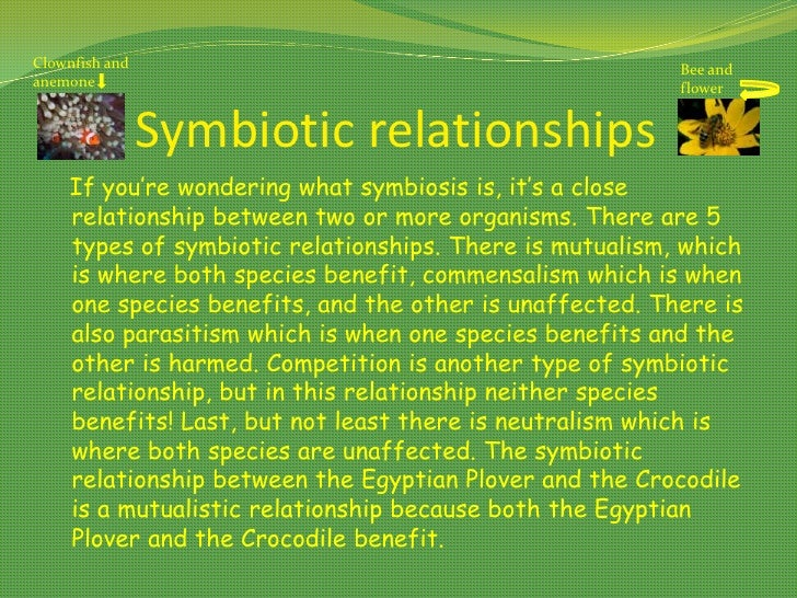 crocodile and egyptian plover symbiotic relationship worksheet