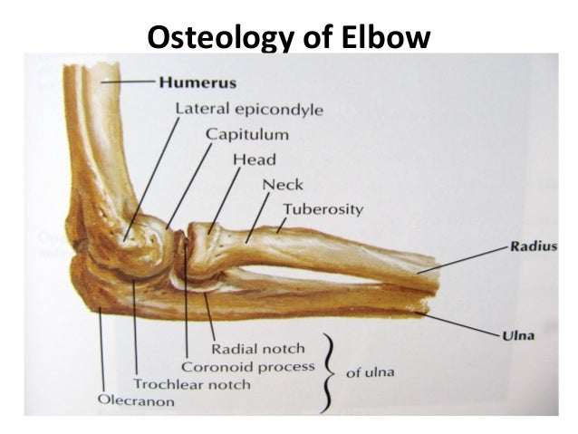 Radiology of the Elbow Joint. Dr. Sumit Sharma