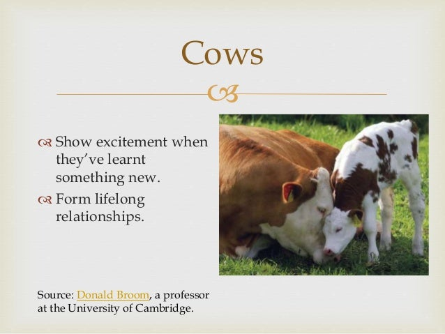 """ Cow's Milk  Videos:  """"Sophie's choice"""" 25.00-26.00 of 'Carnism'.  Reunited. Source: RSPCA 'What happens to Bobby Calv..."""