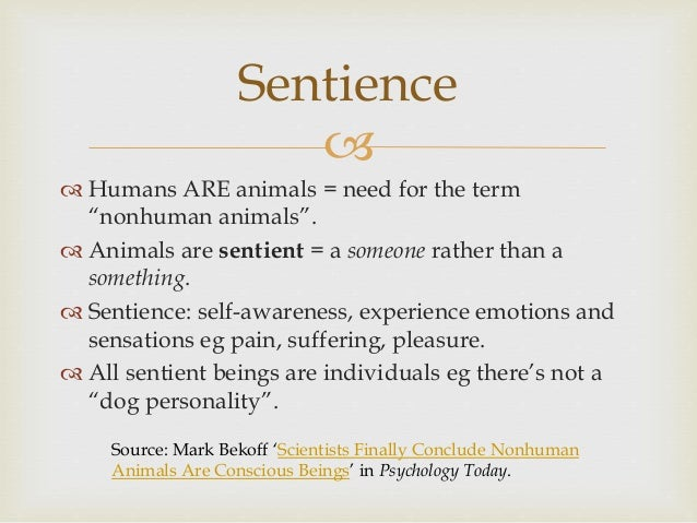   Sentience is often recognised in cats and dogs. Cats and dogs