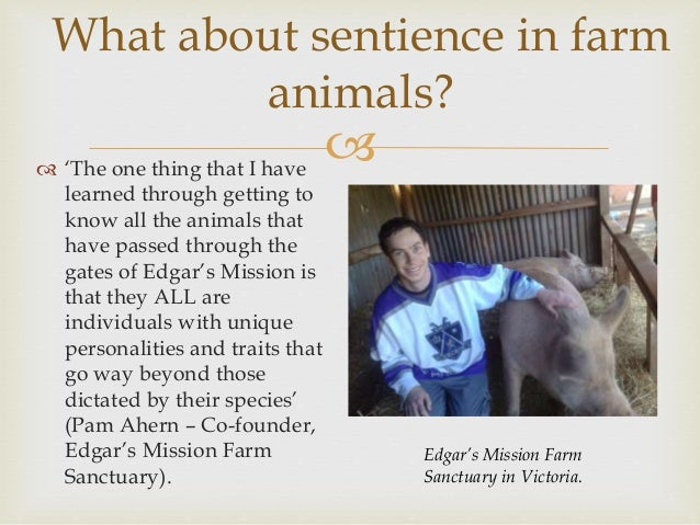  Sheep  Have a strong sense of individuality.  Can recognise the faces of at least 10 people and 50 other sheep for at ...