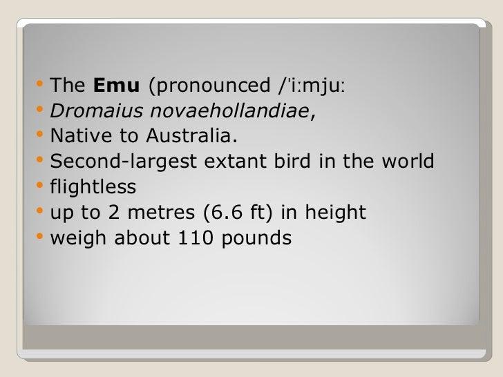 The Emu Slide 2