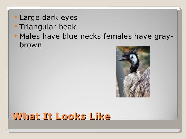 The Emu Slide 3